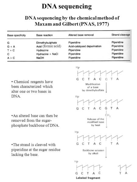 DNA sequencing DNA sequencing by the chemical method of Maxam and Gilbert (PNAS, 1977) (formic acid) Chemical reagents have been characterized which alter.