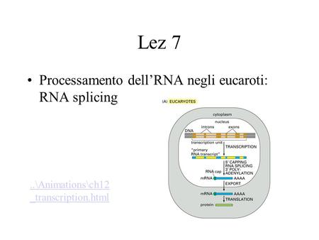 Lez 7 Processamento dellRNA negli eucaroti: RNA splicing..\Animations\ch12 _transcription.html.