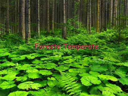Foreste Temperate. Le Foreste Temperate Le zone temperate sono quelle vicine al 45° parallelo.
