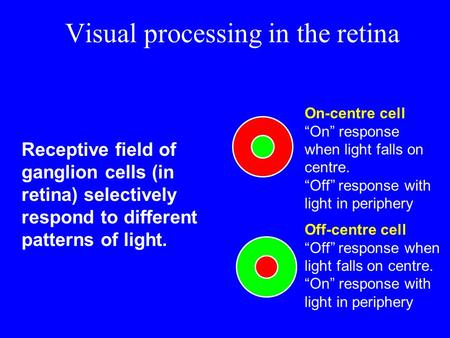 Visual processing in the retina Receptive field of ganglion cells (in retina) selectively respond to different patterns of light. On-centre cell On response.