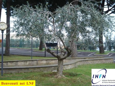 1 Benvenuti nei LNF. Frascati National Labs (LNF) Lab footprint 135000 m 2 Total Staff 368 Researchers 98 Technologist/ Engineers 62 Technicians 167.
