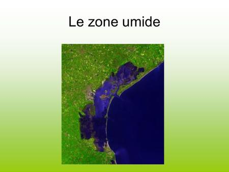Le zone umide.