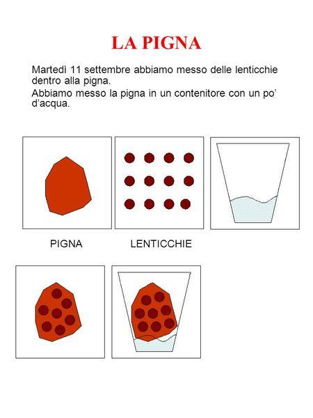 Curiosita 39 sulla danimarca ppt scaricare for Lenticchie d acqua