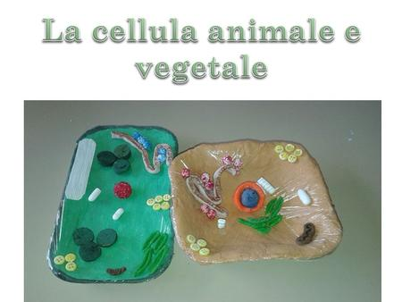 La cellula animale e vegetale