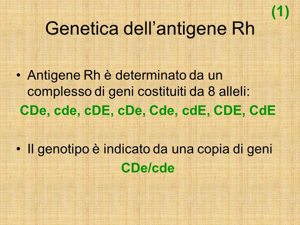 Genetica dellantigene Rh Il locus genetico è sul braccio corto del cromosoma 1, costituito da 2 strutture distinte ed adiacenti luna allaltra RhCcEe RhD Un gene codifica Cc ed Ee ed uno D Gli individui D-Negativi mancano del gene RhD su entrambi i cromosomi (delezione del gene D) (2)