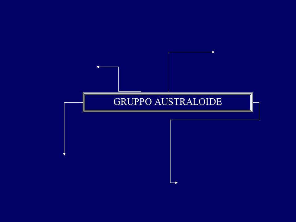 GRUPPO AUSTRALOIDE