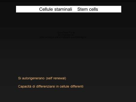 Si autorigenerano (self renewal) Capacità di differenziarsi in cellule differenti Cellule staminali Stem cells.
