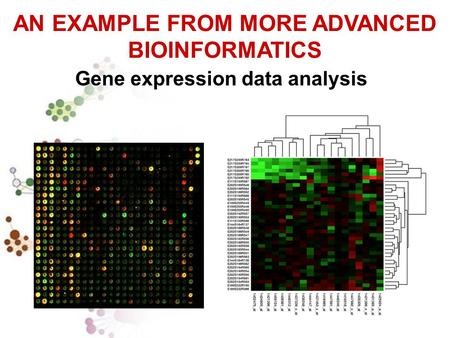 AN EXAMPLE FROM MORE ADVANCED BIOINFORMATICS Gene expression data analysis.