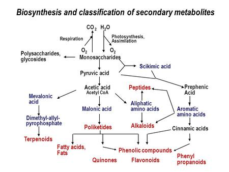 Biosynthesis and classification of secondary metabolites Respiration Photosynthesis, Assimilation O 2 CO 2 H 2 O O 2 Mevalonic acid Dimethyl-allyl- pyrophosphate.