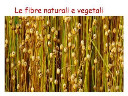 Le fibre naturali vegetali ppt scaricare for Fibre naturali