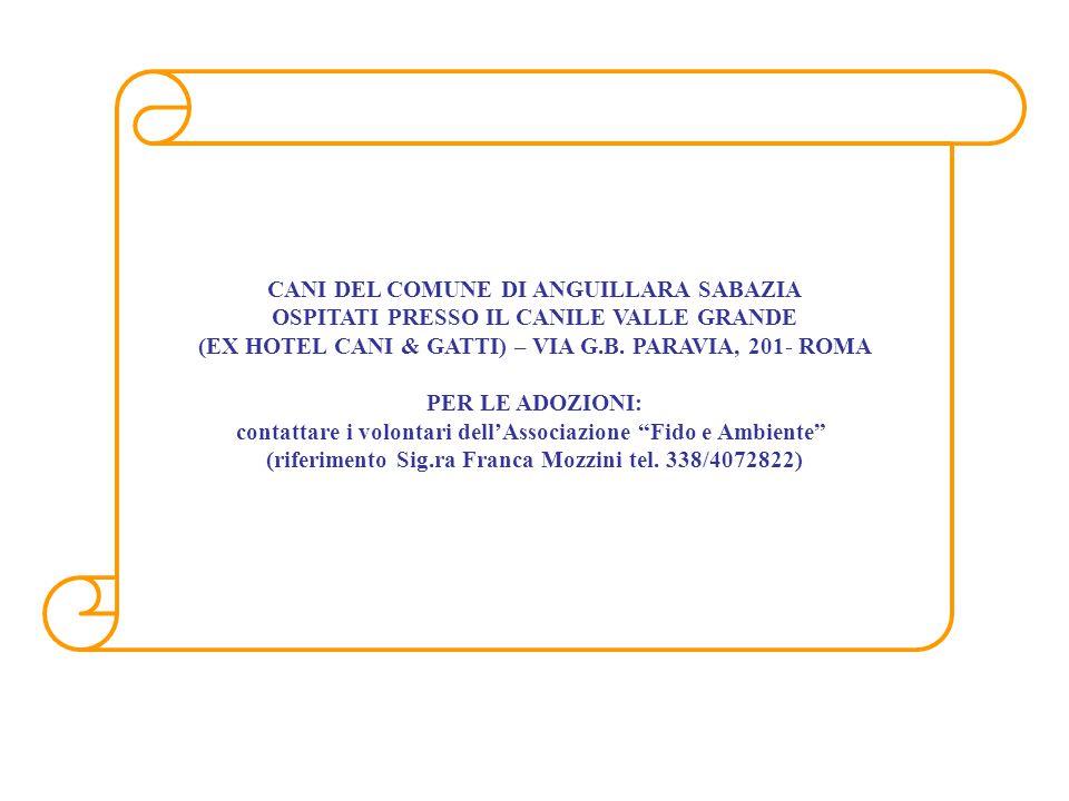 MICROCHIP968000004846395 RAZZAMeticcio SESSOM MANTELLONero DATA INGRESSO21/06/2009 NASCITA PRESUNTA 01/01/2009 MICROCHIP981100002052330 RAZZAMaremmano SESSOM MANTELLOBianco DATA INGRESSO29/01/2010 NASCITA PRESUNTA 01/01/2009 MICROCHIP968000004154842 RAZZAMeticcio SESSOM MANTELLONero Focato DATA INGRESSO10/01/2008 NASCITA PRESUNTA 01/06/2007 Pallino GiorgioNeretto