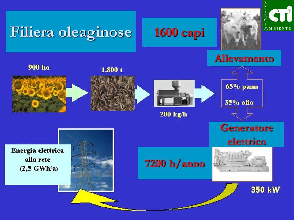Filiera oelaginose Con un un kg di semi possono essere operate le seguenti scelte: vendita diretta a prezzi di mercato, valore attuale 18-20 c vendita diretta a prezzi di mercato, valore attuale 18-20 c produzione di 0,3-0,4 kg di olio non alimentare da vendere per la trasformazione in biodiesel, valore 15 c.
