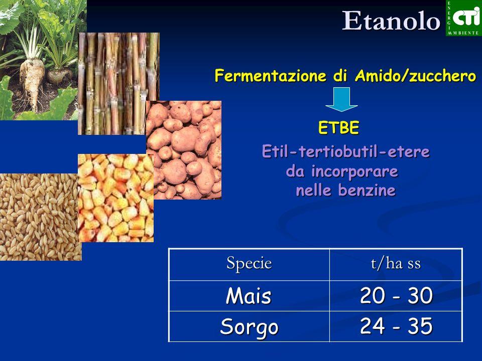 Produzione di Etanolo Materie prime Materie prime Canna da Zucchero: Brasile Canna da Zucchero: Brasile Cereali: USA con granella di Mais Cereali: USA con granella di Mais Bagassa di canna da zucchero, stocchi di mais, patata Bagassa di canna da zucchero, stocchi di mais, patata Valore di mercato delletanolo 0,4 /litro Valore di mercato delletanolo 0,4 /litro Rese di etanolo per colture nazionali: 4500 litri/ha = 7 t/ha zucchero 1800 /ha Rese di etanolo per colture nazionali: 4500 litri/ha = 7 t/ha zucchero 1800 /haMA….