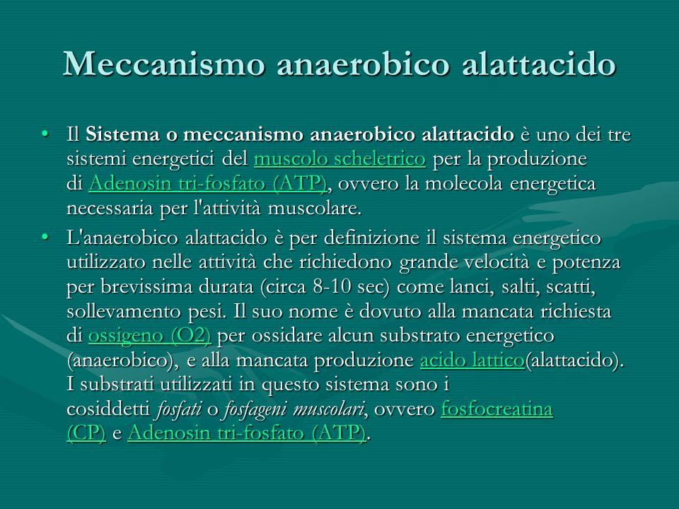 I grassi come fonte di energia Due sono i concetti fondamentali da ricordare sul metabolismo dei grassi.Due sono i concetti fondamentali da ricordare sul metabolismo dei grassi.