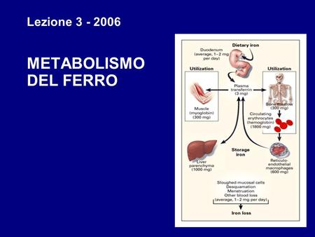 1 Lezione 3 - 2006 METABOLISMO DEL FERRO 2 3 4 Iron containing proteins are classified as: Heme – contains a porphyrin-iron complex. HemoglobinHemoglobin.