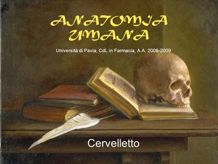 ANATOMIA UMANA Università di Pavia, CdL in Farmacia, A.A. 2008-2009 Cervelletto.