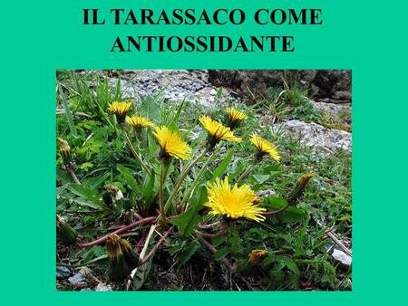 IL TARASSACO COME ANTIOSSIDANTE. LAVORO DI PARTENZA: Phytochemistry. 1996 May;42(1):121-7. Flavonoids, cinnamic acids and coumarins from the different.