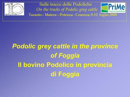Podolic grey cattle in the province of Foggia Il bovino Podolico in provincia di Foggia Sulle tracce delle Podoliche On the tracks of Podolic grey cattle.