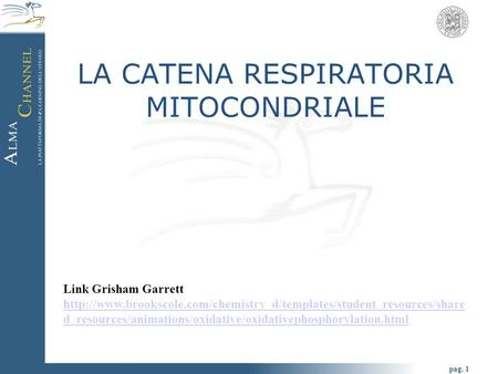 Pag. 1 LA CATENA RESPIRATORIA MITOCONDRIALE Link Grisham Garrett  d_resources/animations/oxidative/oxidativephosphorylation.html.