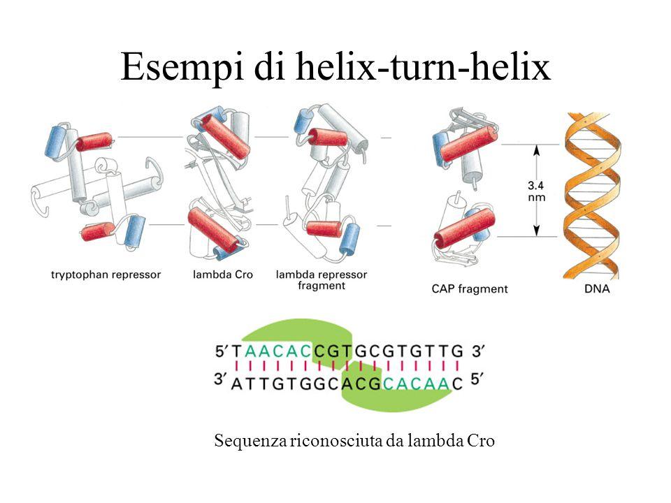 DNA-binding domains Il zinc finger è un DNA-binding domain.