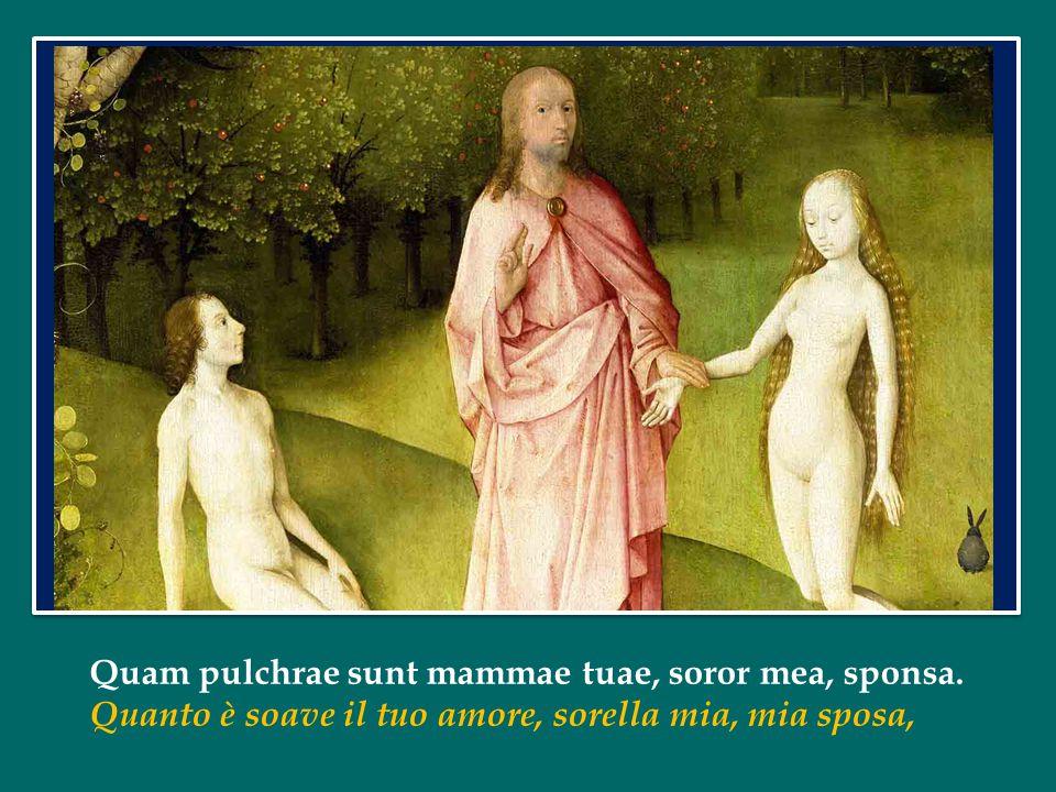 Quam pulchrae sunt mammae tuae, soror mea, sponsa.