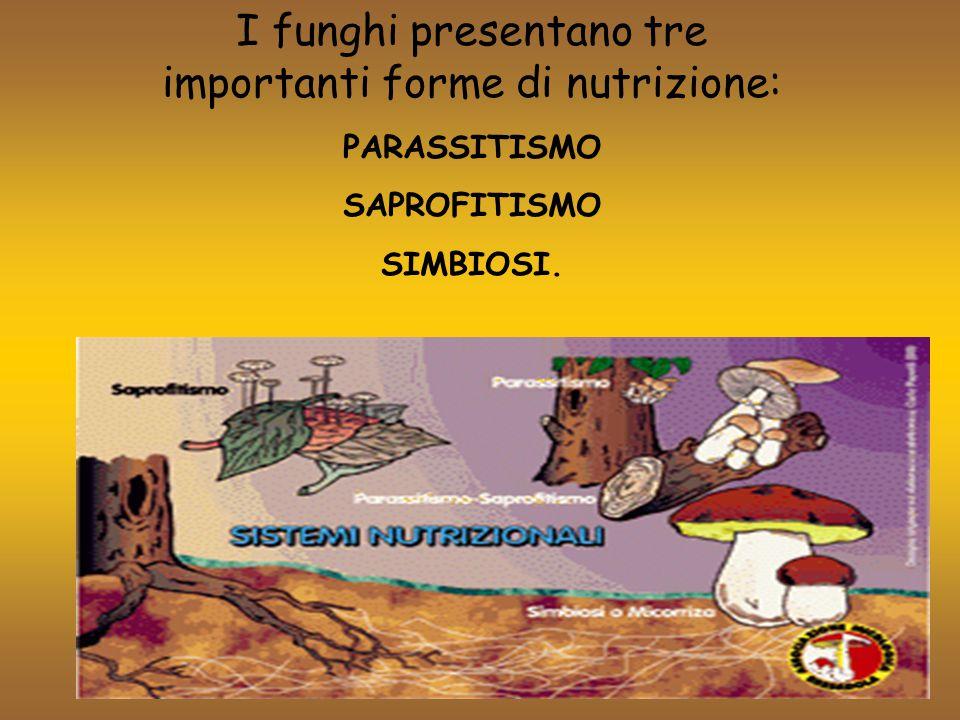 I funghi PARASSITI sono quelli che vivono a spese di piante e animali vivi creando loro un danno (malattia).