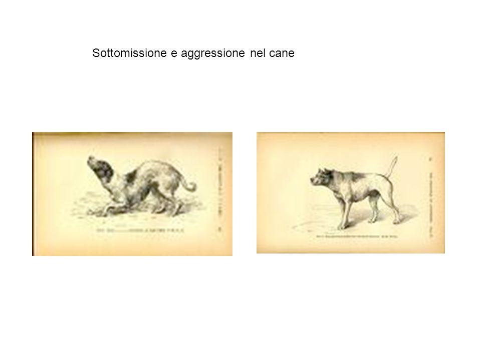 Fattori dell'oblio dell'Espressione secondo Ekman (1995) 1) ANTROPOMORFISMO (in contrasto con il behaviorismo prevalente) 2) DATI ANEDDOTICI non sistematici 3) EREDITARIETÀ DEI CARATTERI ACQUISITI (prevale nelle edizioni successive sulla mutazione e selezione casuale) 4) non tratta il VALORE DELL'ESPRESSIONE PER LA COMUNICAZIONE (in quanto argomento finalistico tradizionale a sostegno della tesi creazionista) 5) BIOLOGISMO INNATISTA (in contrasto con il relativismo ambientalista ritenuto più democratico )