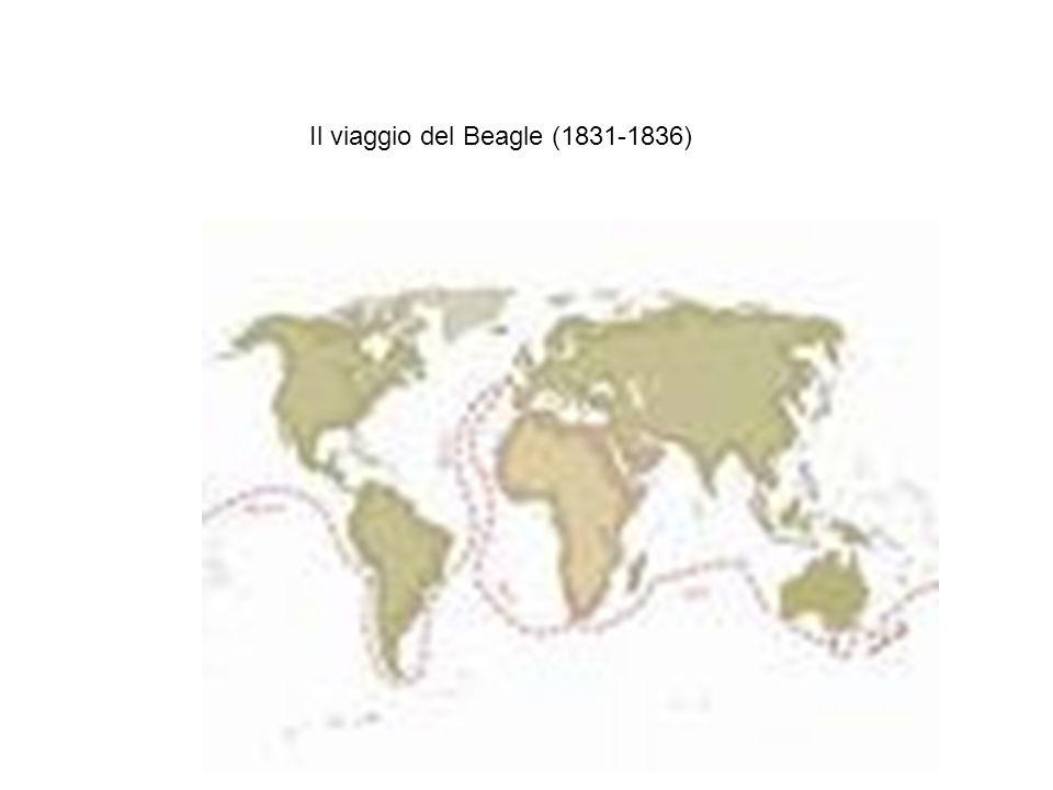 I fringuelli delle Galapagos
