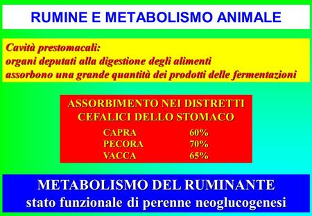 RUMINE E METABOLISMO ANIMALE