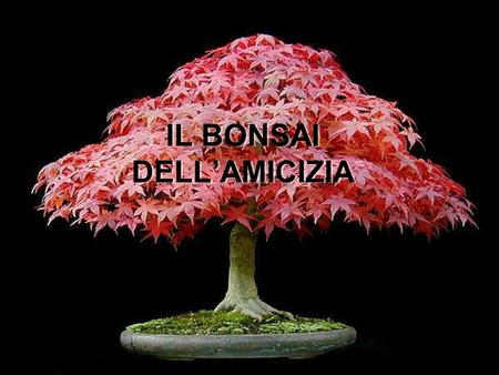 IL BONSAI DELL'AMICIZIA
