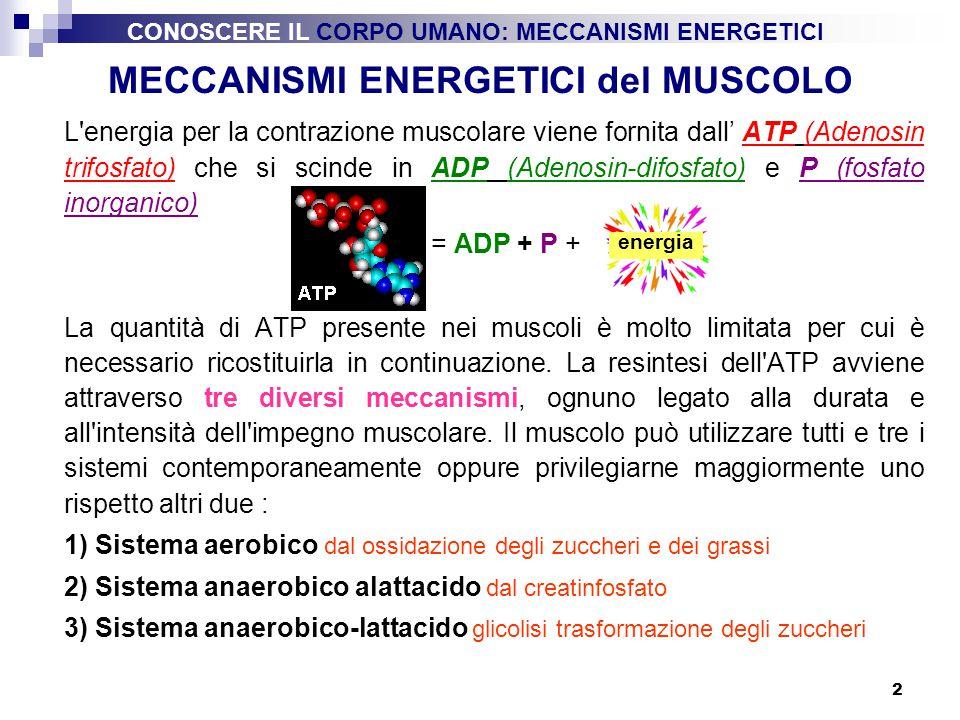 3 1) Sistema ATP-CP (anaerobico alattacido) Questo meccanismo si innesca in assenza di O 2 e senza formazione di Acido lattico nei muscoli, utilizzando una molecola altamente energetica immagazzinata nel muscolo la creatinfosfato o fosfocreatina - CP, la CP in seguito allo stimolo nervoso libera una grande quantità di energia scindendosi in creatina (C) e fosforo (P), quest ultimo con l ADP va a riformare l ATP.