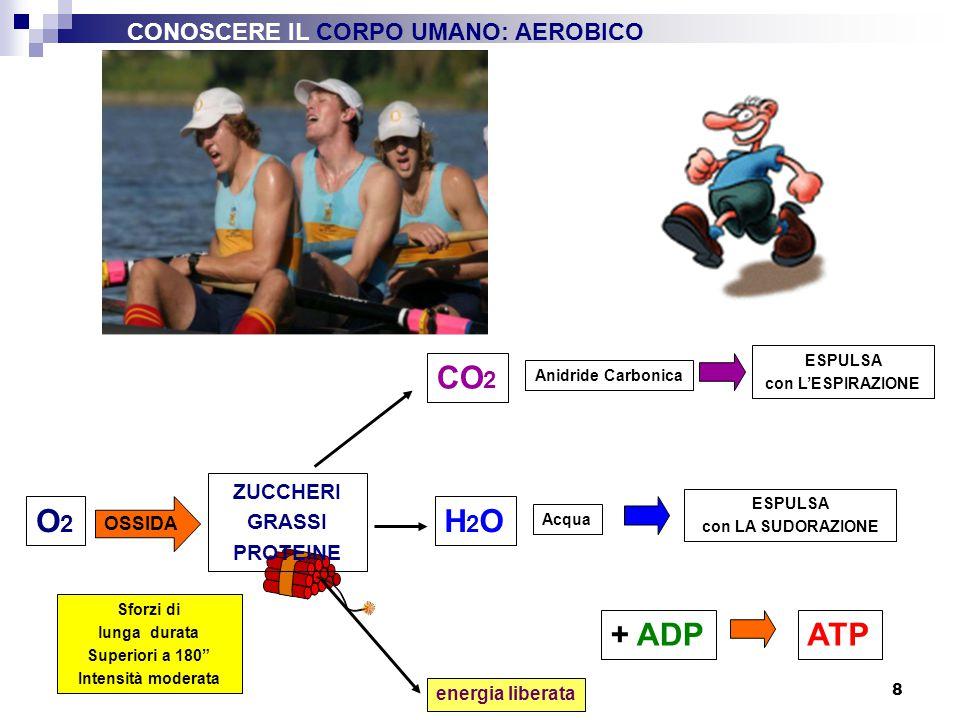 9 Sistema ATP-CP (anaerobico alattacido) Sistema anaerobico lattacido Glicolisi Glicogeno muscolare Sistema aerobico FONTEdIENERGIAFONTEdIENERGIA MECCANISMI ENERGETICI del MUSCOLO IN RAPPORTO ALLA DURATA NEL TEMPO TEMPO CONOSCERE IL CORPO UMANO: SISTEMI ENERGETICI