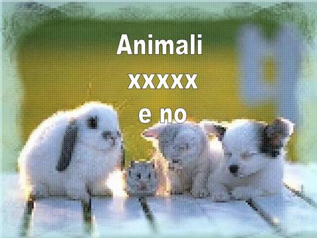 Animali xxxxx e no.