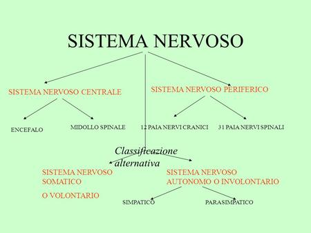 SISTEMA NERVOSO Classificazione alternativa SISTEMA NERVOSO PERIFERICO