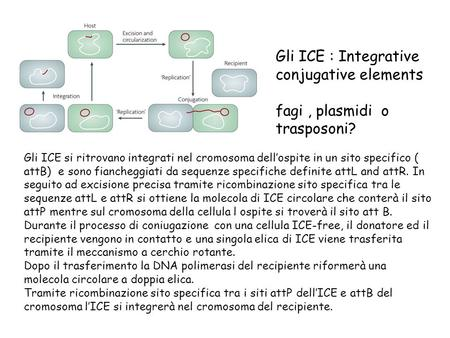 Gli ICE : Integrative conjugative elements