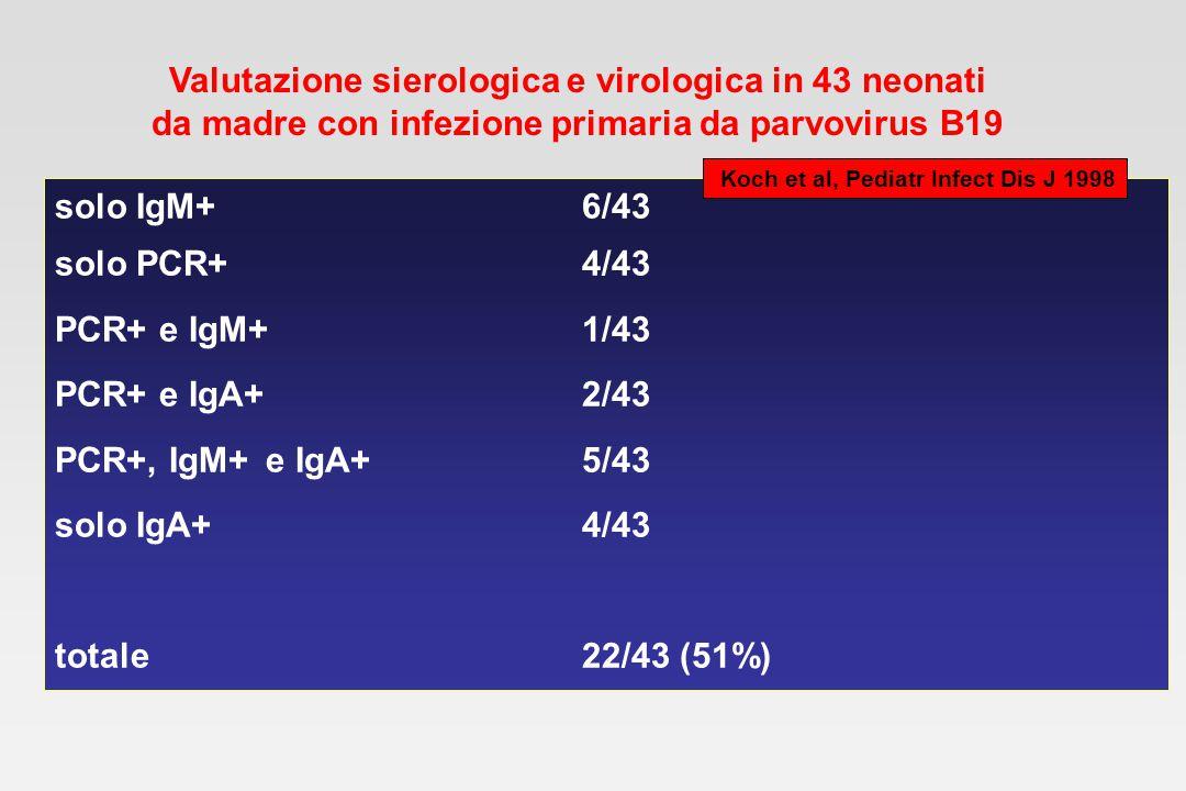 Follow-up sierologico e virologico in 13 neonati da madre con infezione primaria da parvovirus B19 nascita4 m1 anno _______________________________________________________ Anticorpi: IgG13/139/103/11 IgM4/130/100/11 IgA5/131/100/11 PCR su: siero2/131/100/10 urine2/121/100/5 saliva2/62/50/4 Koch et al, Pediatr Infect Dis J 1998
