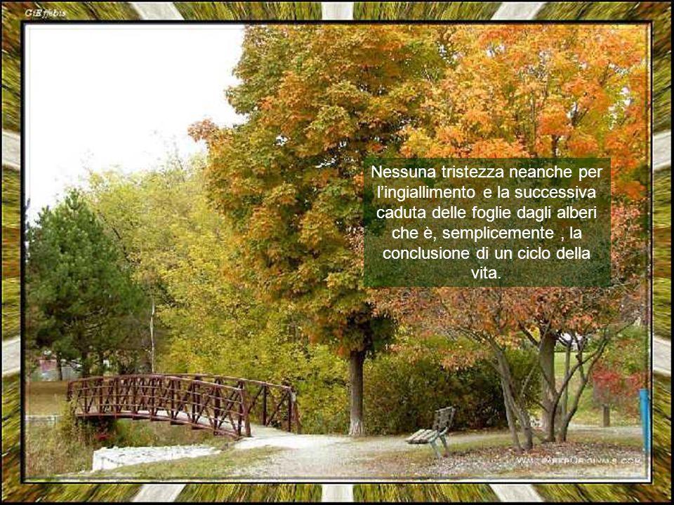 Nessuna tristezza neanche per l'ingiallimento e la successiva caduta delle foglie dagli alberi che è, semplicemente, la conclusione di un ciclo della vita.