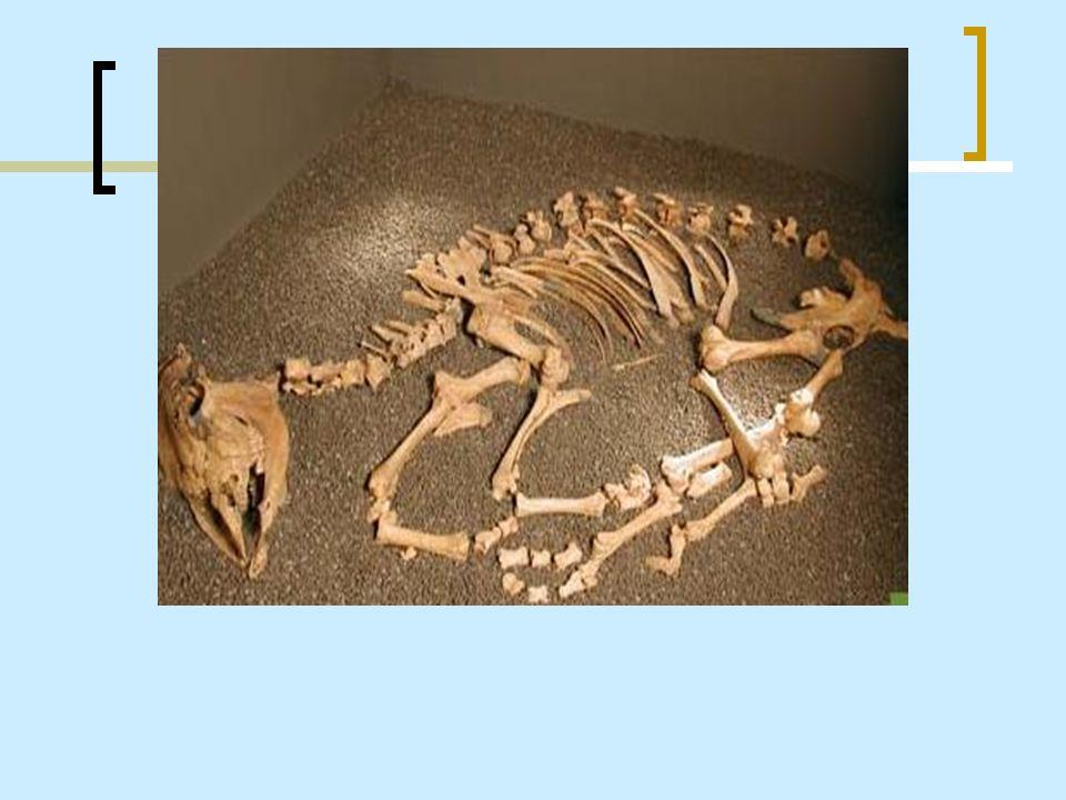 Urne cinerarie Sono state trovate nel sito di Scalvinetto a Legnago.