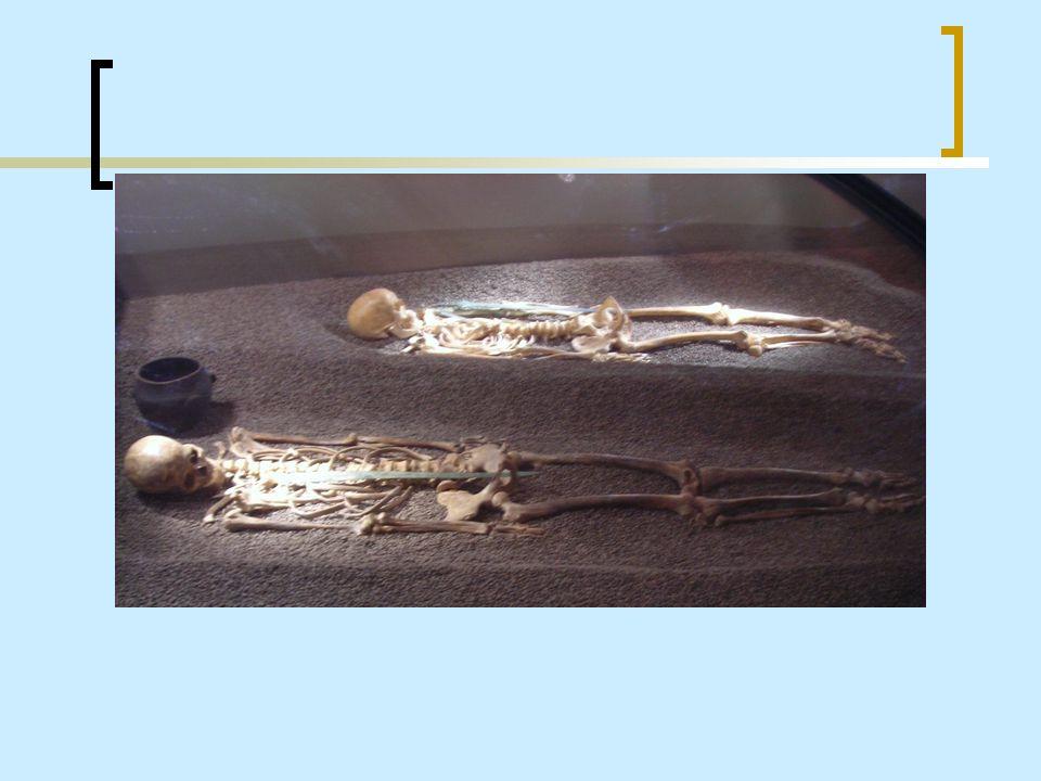 Scheletri umani Nella seconda sala presente nel museo archeologico vi sono quattro scheletri di inumati, di cui due femmine e due maschi, provenienti dalla necropoli dell Olmo (Nogara) risalente allEtà del Bronzo.