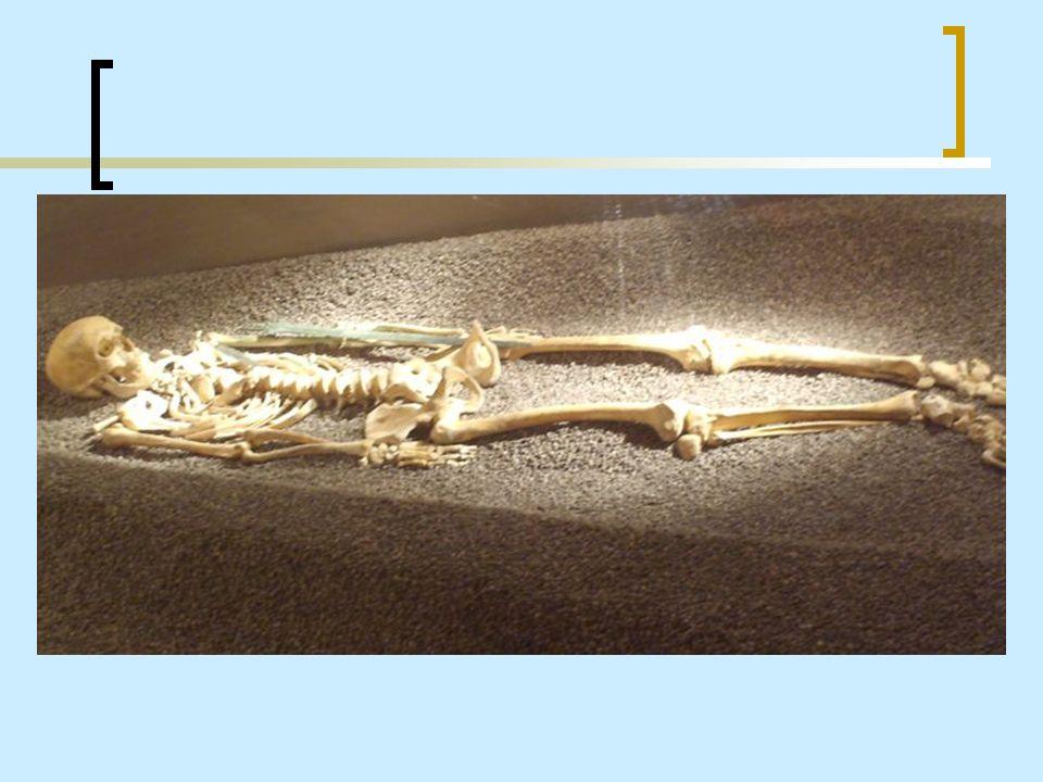 Lo studio delle ossa di uno scheletro permette di stabilire il sesso del defunto.