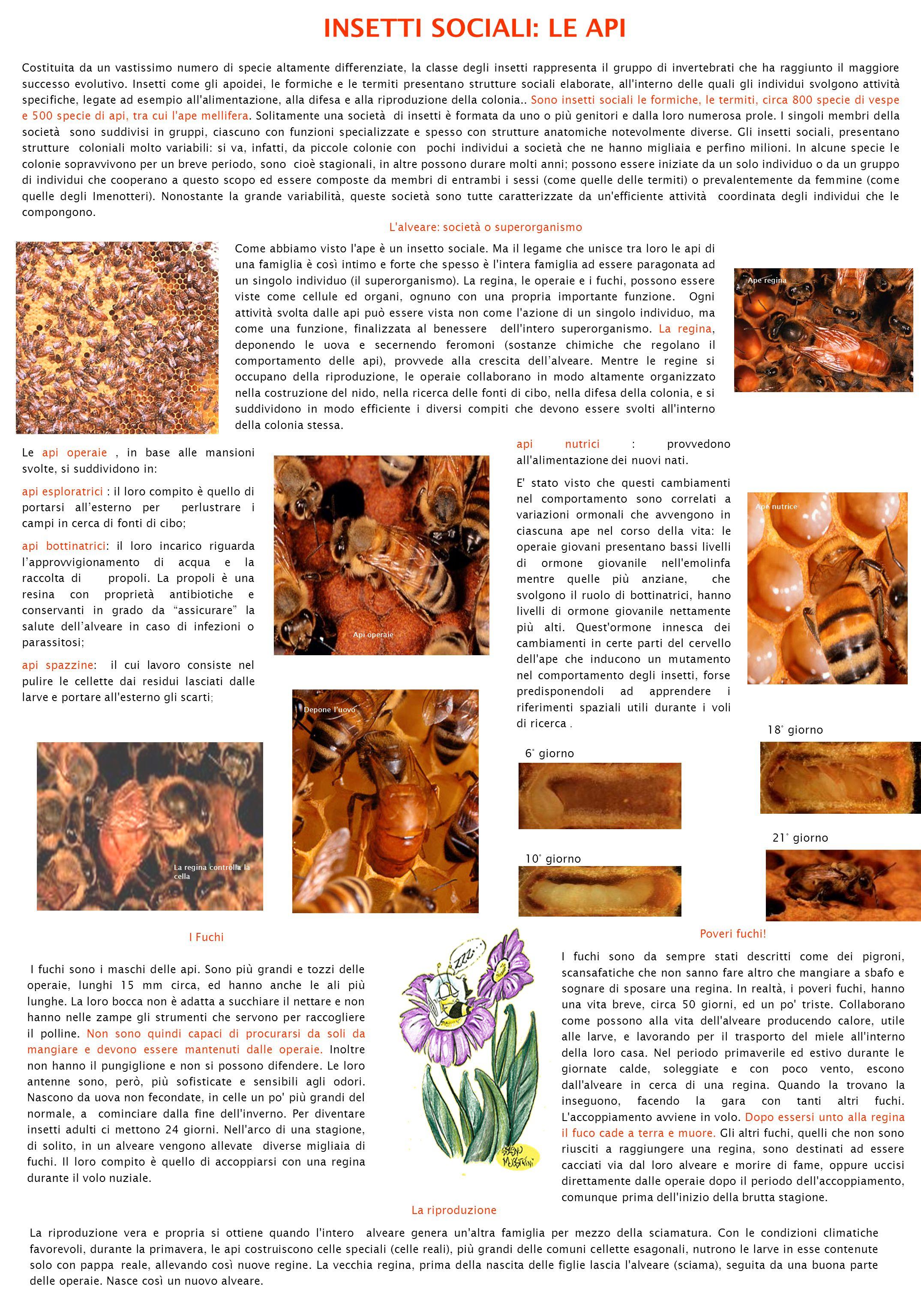 INTRODUZIONE: IL TERMINE FORMICA è il nome comune degli Insetti Imenotteri della famiglia dei Formicidi (6000 specie).