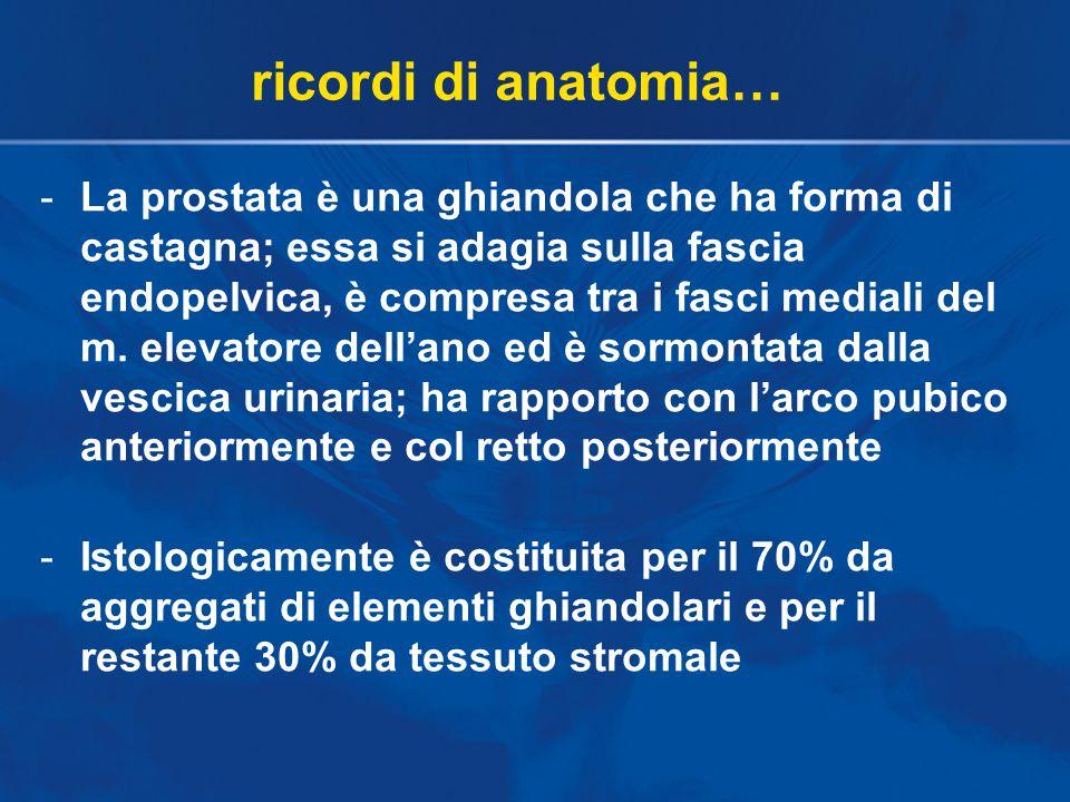 -In essa si distinguono diverse zone che nell'uomo derivano dalla fusione di quelle che nei primati sono le prostate craniale e caudale …filogenetica…