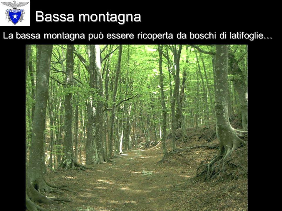 … oppure da boschi di conifere. Bassa montagna