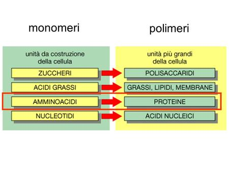Monomeri polimeri. What is a protein? A protein is a polymer of of fixed length, composition and structure made by a combination of the 20.