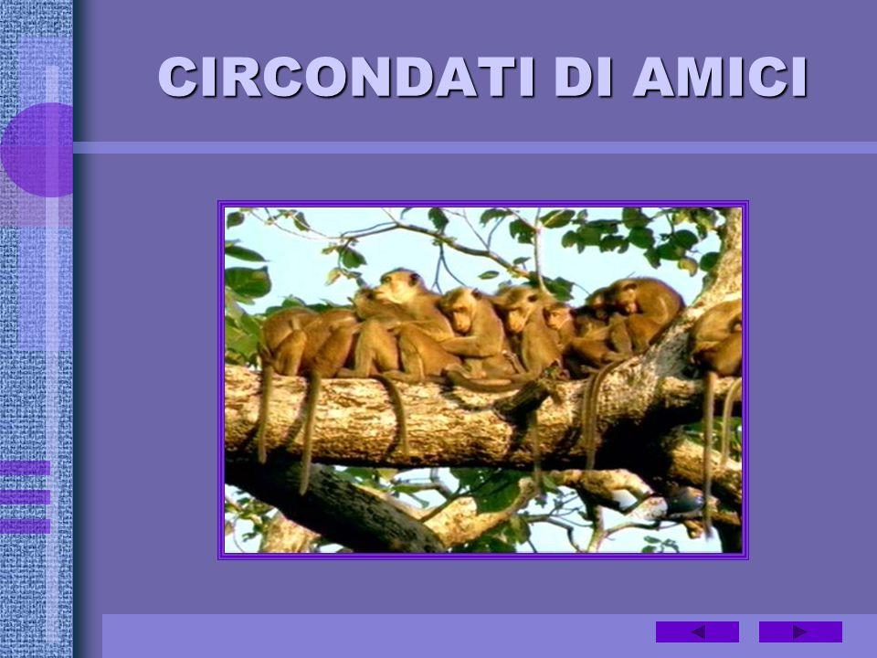CIRCONDATI DI AMICI