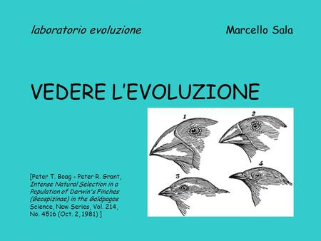 Laboratorio evoluzione Marcello Sala VEDERE L'EVOLUZIONE [Peter T. Boag - Peter R. Grant, Intense Natural Selection in a Population of Darwin's Finches.