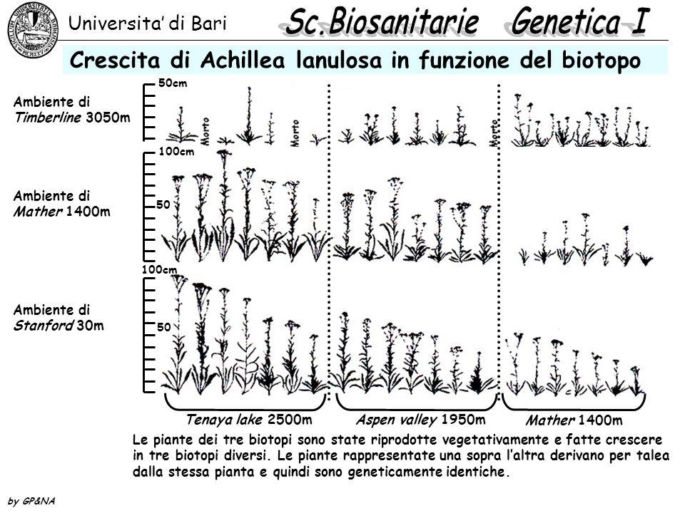 Universita' di Bari by GP&NA Grafico della crescita di Achillea lanulosa Rappresentazione grafica della crescita delle 7 piante precedenti nei tre biotopi diversi Altitudine Altezza delle piante