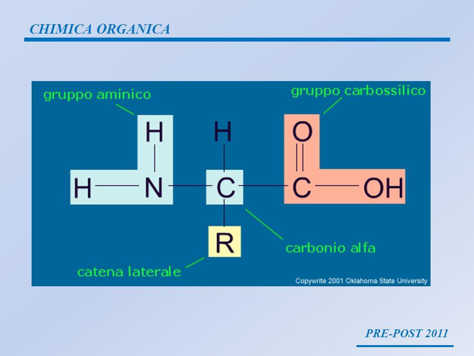 PRE-POST 2011 CHIMICA ORGANICA La struttura primaria è formata dalla sequenza specifica degli amminoacidi, dalla catena peptidica e dal numero stesso delle catene, determina da sola il ripiegamento della proteina.struttura primaria