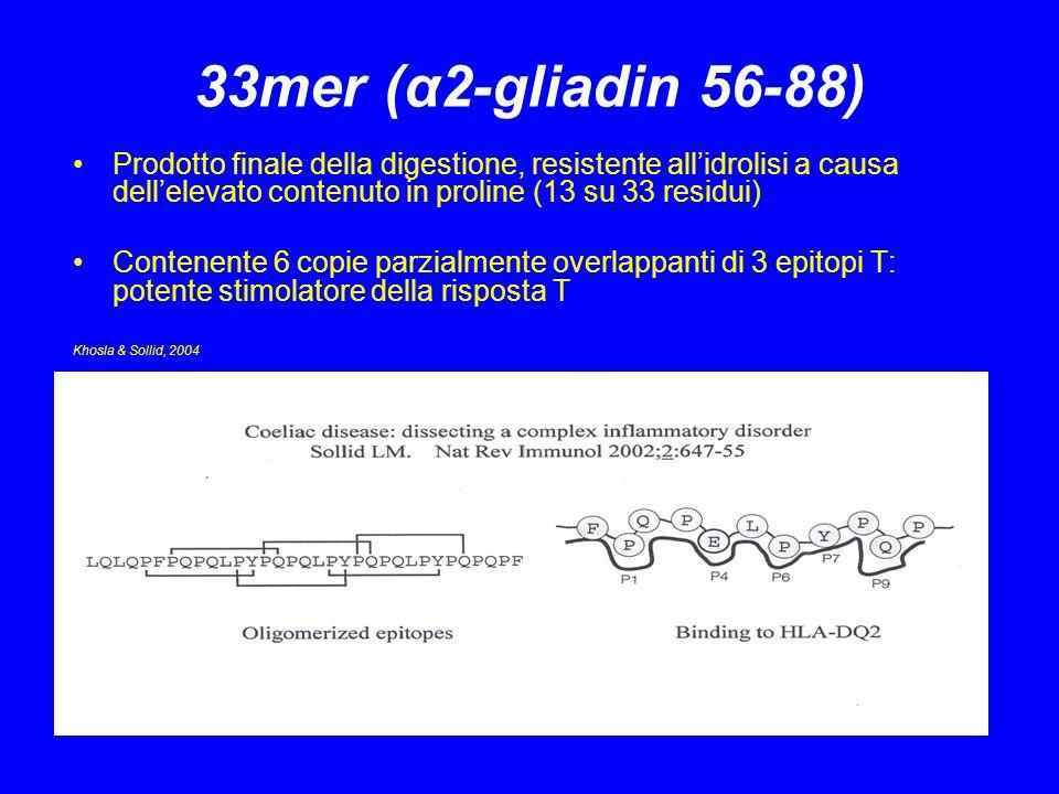 Diminuzione del carico antigenico Terapia enzimatica supplementare o digestione di cereali tossici mezzo di proteasi batteriche Prolilendopeptidasi (PEPs) sono enzimi endoproteolitici: al contrario delle proteasi del tratto gi possono digerire sequenze ricche di prolina e ridurre il carico di epitopi T (Hausch 2002, Marti 2005) Pretrattamento di glutine con PEPs inibisce lo sviluppo di malassorbimento di grassi e carboidrati in soggetti sottoposti a challenge con 5 g di glutine per 2 settimane (Pyle et al, 2005)
