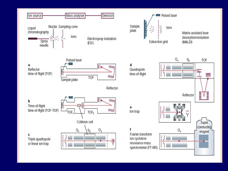 Fragment fingerprinting del peptide selezionato: la sequenza parziale, insieme con la massa, costituisce un tag di sequenza che può essere utilizzato come probe, altamente specifico, per identificare proteine nei database proteici.
